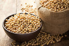TEMOS SOJA GMO – GMO SOYABEAN - ORI...