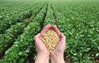 SOJA GMO