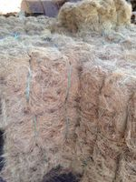 fibra de coco do coco -