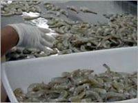 Farm-Raised Camarões Mar -