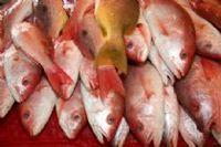 Peixe congelado -