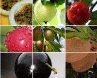 Extratos de ervas - Uma variedade de plantas medicinais do Brasil! -