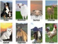Produtos veterinários -