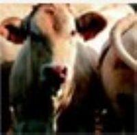 Nutrição Animal -