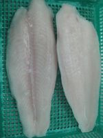 Congelado Pangasius / basa peixe / filé swai -