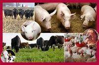 Nós fornecemos todos os tipos de carne congelada e produtos de frango -