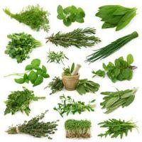 Todo o tipo de extrato de planta, semente de planta, planta Bark, Flakes -